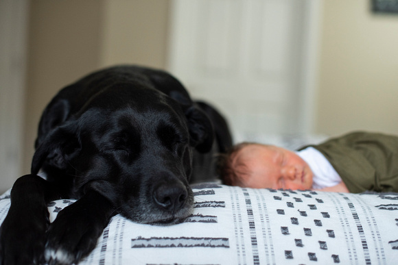 Dog taking a nap next to newborn baby during photos in Asheville