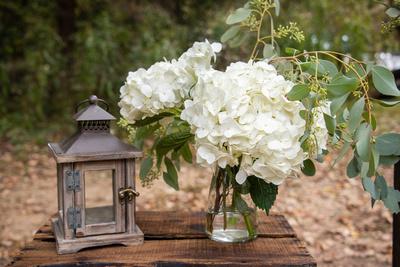 Hydrangeas at Asheville Botanical Gardens wedding